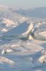 antarctic 08